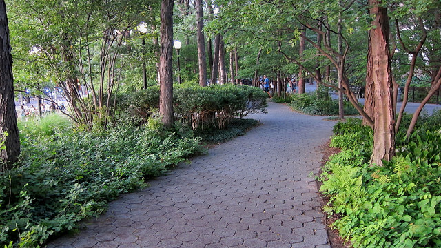A drift of dwarf fragrant sumac covers the ground on the left side of this path at Battery Park. Photo by  Flikr user cultivar413 ,  CC BY-SA 2.0