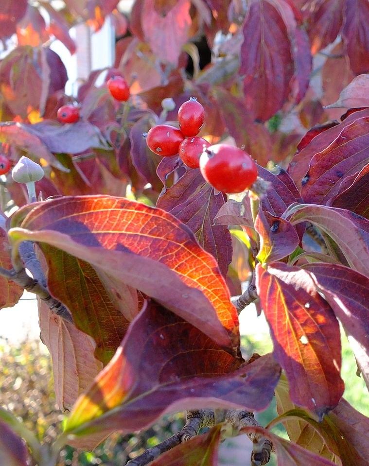 leaves-990549_1280.jpg