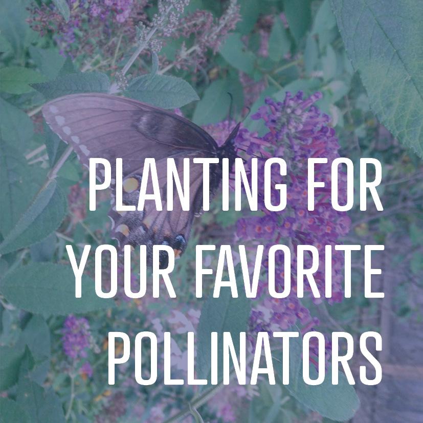 11-14-16 planting for your favorite pollinators.jpg