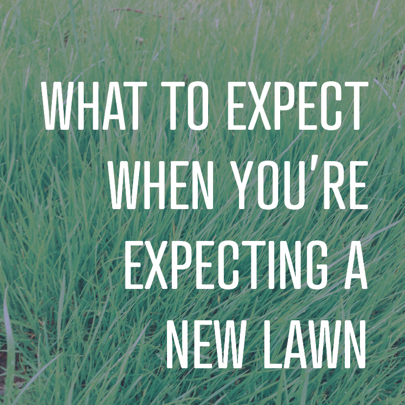 09-30-16 WHAT TO EXPECT WHEN YOU'RE EXPECTING A NEW LAWN.jpg