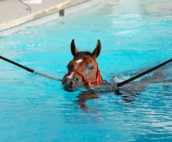 Photo from http://www.sanctuaryequinerehab.com/pool_treatment.html