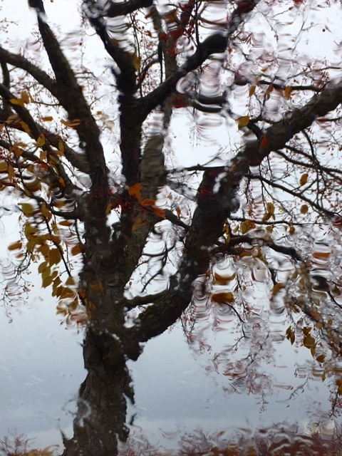 From the tallest tree  by the half frozen canal  of blue afternoon –  the startling music  of so many winter blackbirds.  ~S. Jefts
