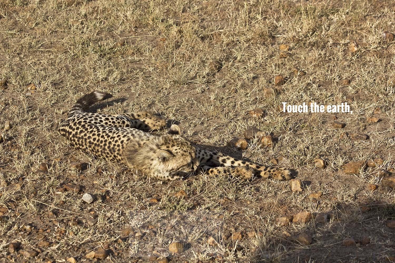 A_cheetah cub2_touch.jpg