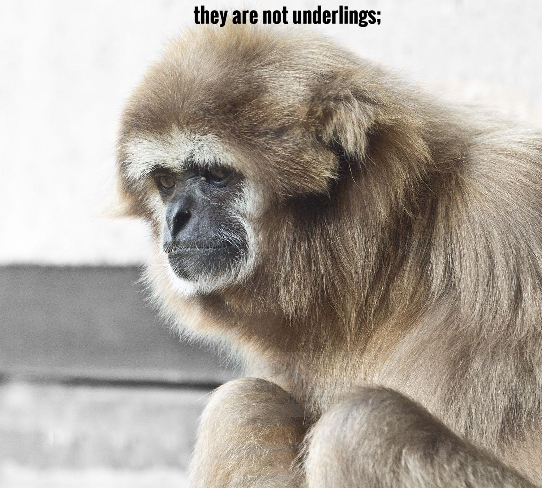 LLL_monkey2_beston.jpg