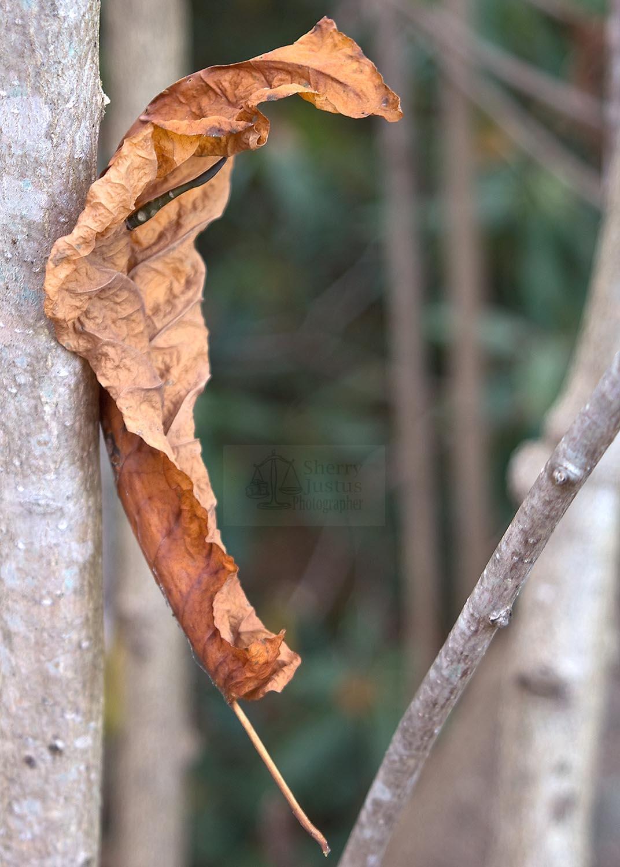 Balanced leaf