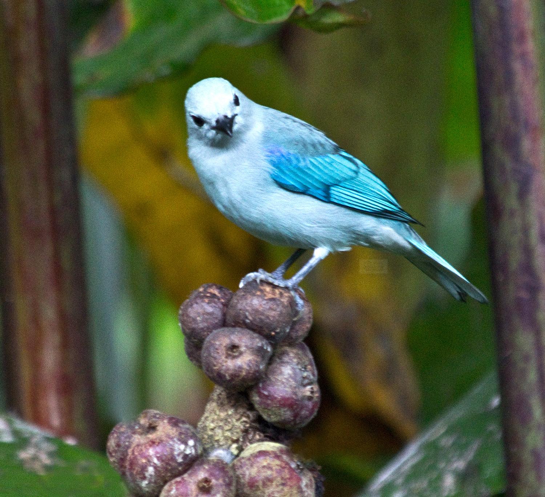 perched blue bird.jpg