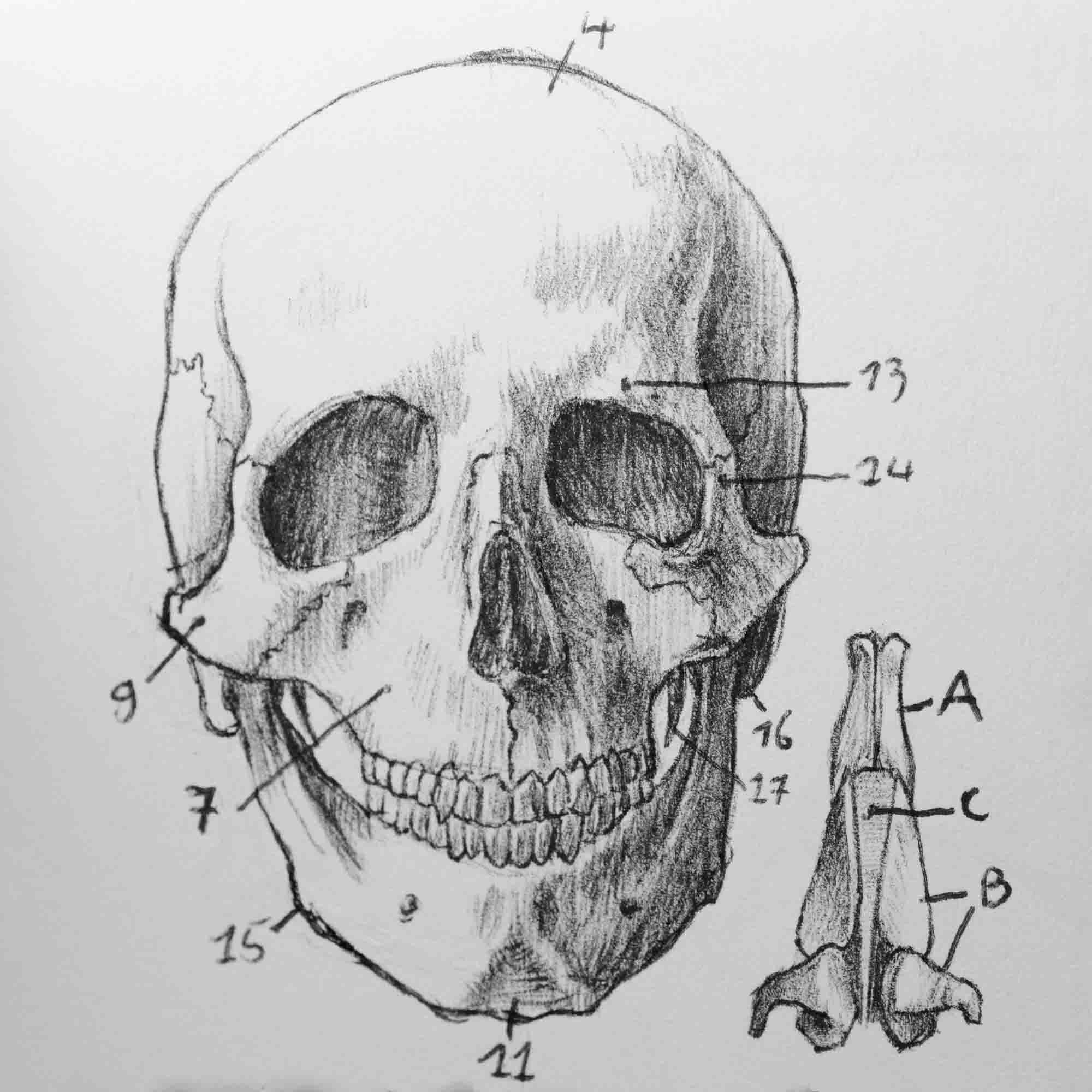 book_anatomical_studies_header.jpg