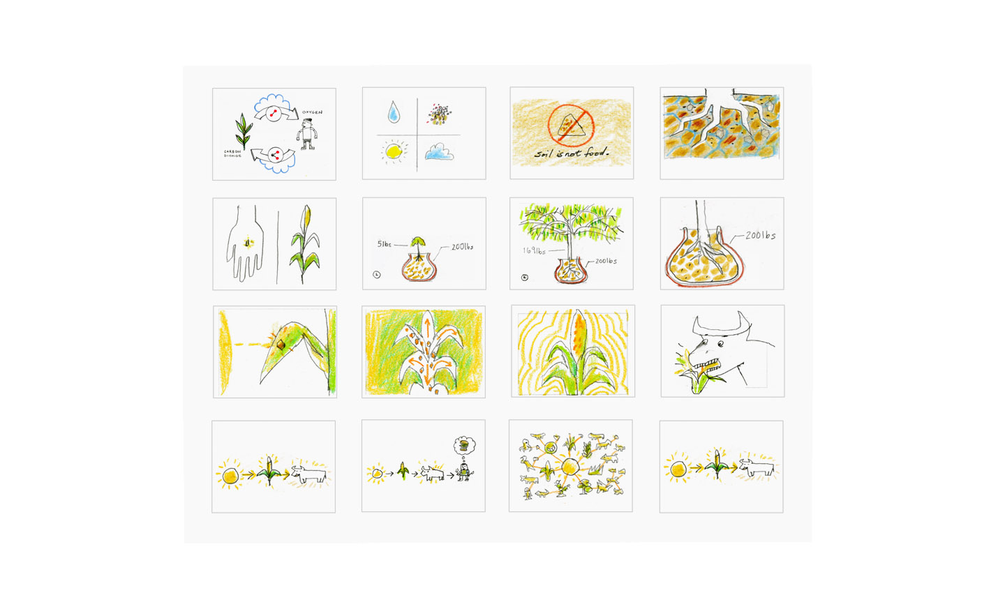photosynthesis_sketches3.jpg