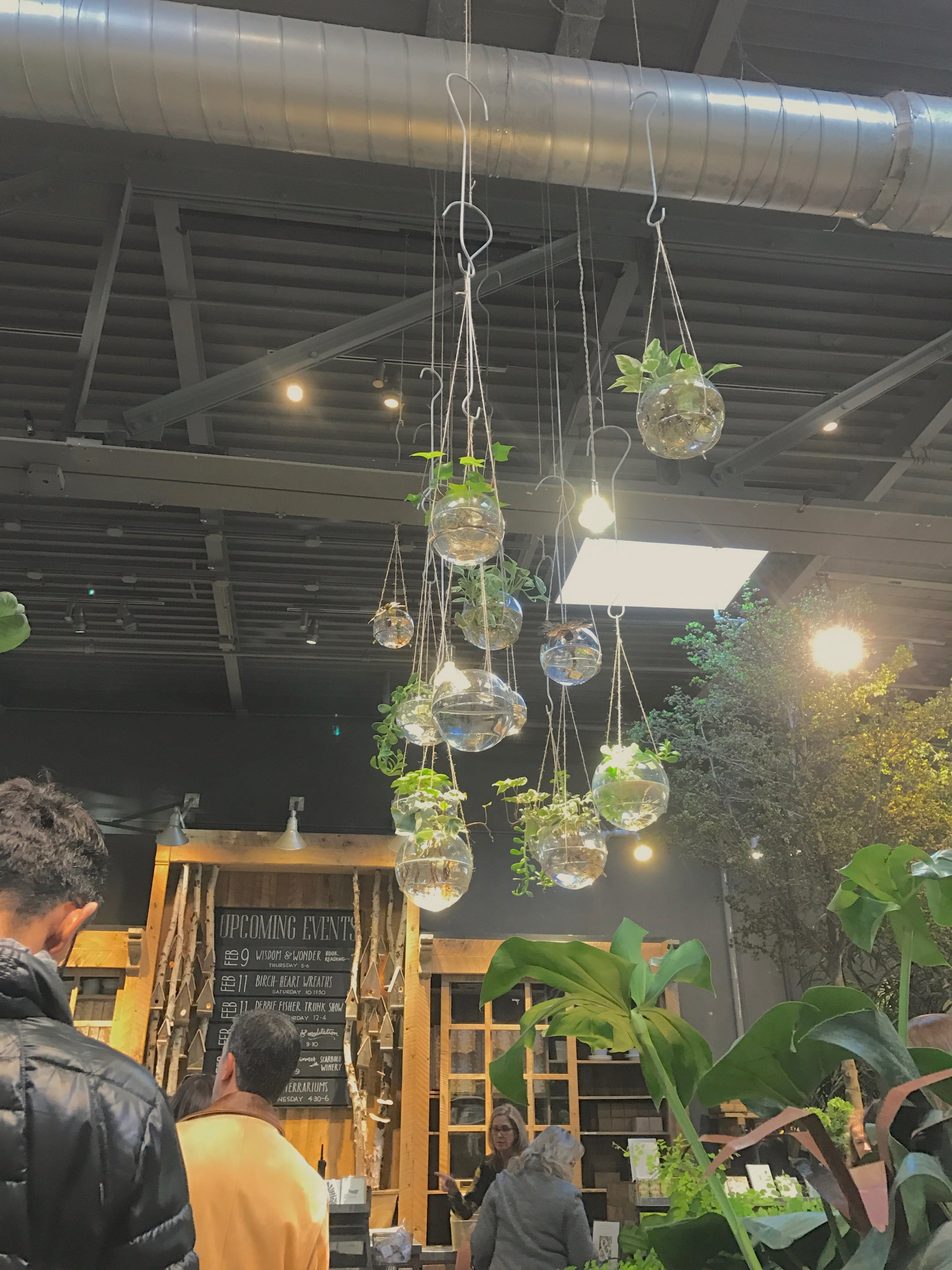 Plants from floor to ceiling