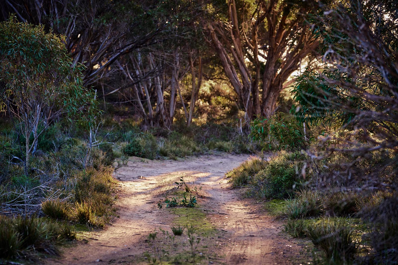 On the way to feed the chooks, Kangaroo Island, South Australia. Click on the image to buy.