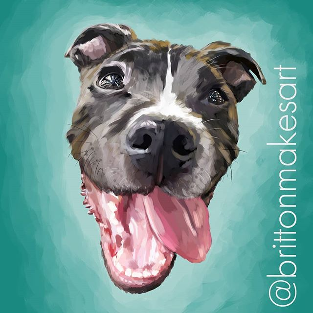 It's #roslindale 's very own, Maddox! Thank you @jarzika for commissioning a local #rozzie artist to paint such a handsome dog. . . .  #brittonmakesart #illustration #painting #2dillustration #krita #photoshop #wacom #art #drawing #handmade #illustrationart #artinsta #artwork #draw #conceptart #digitalpainting #canvas #dogportrait #petportrait #waggeyland #portrait #dog #doge #doggo #commission #dogs #sketch #paint