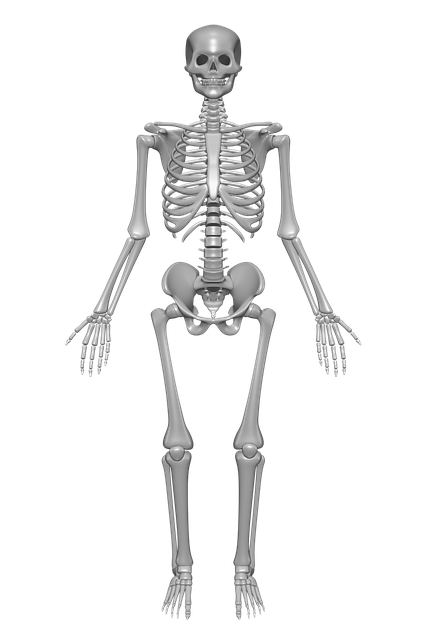 Performing strength training helps increase bone mineral density, keeping your skeleton strong!