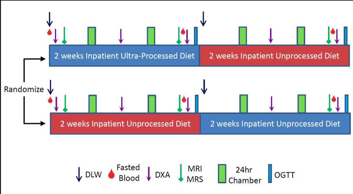 The study design above, with both groups participating in 2 weeks of ultra-processed and 2 weeks unprocessed diets.