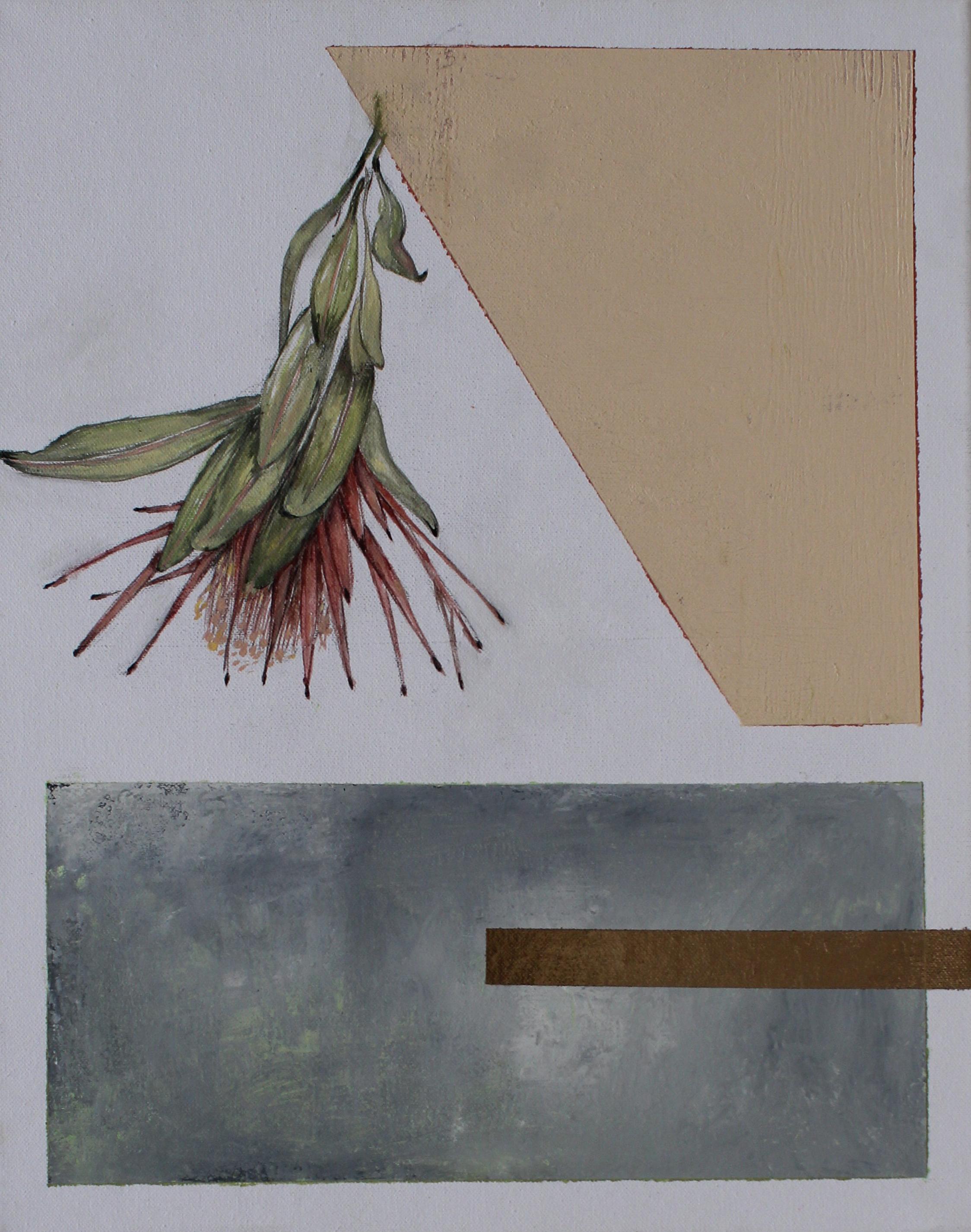 Protea Repens. Dried.jpg
