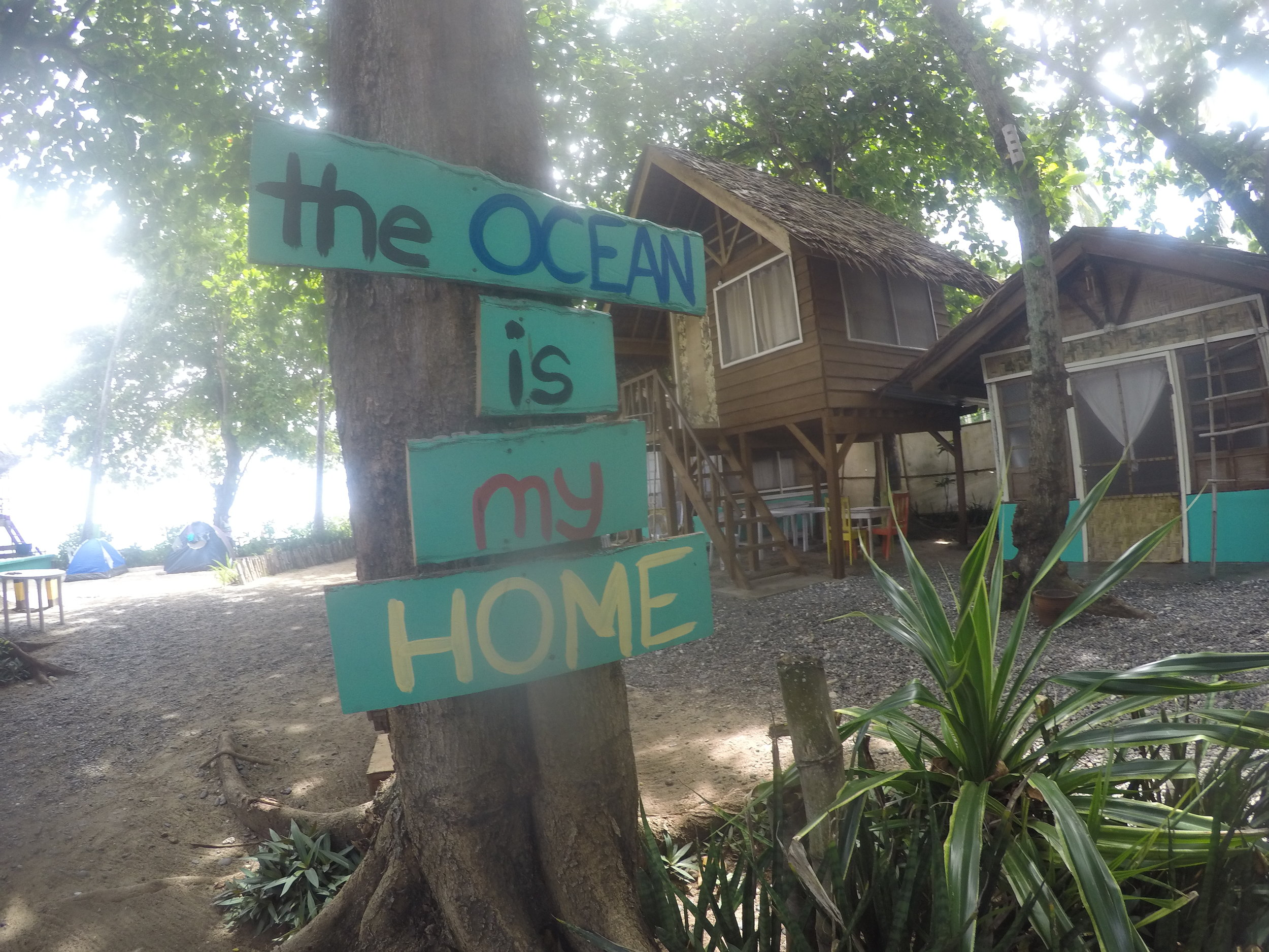 Almost every tree in DSR has a catchy phrase that echoes all our love for the ocean.