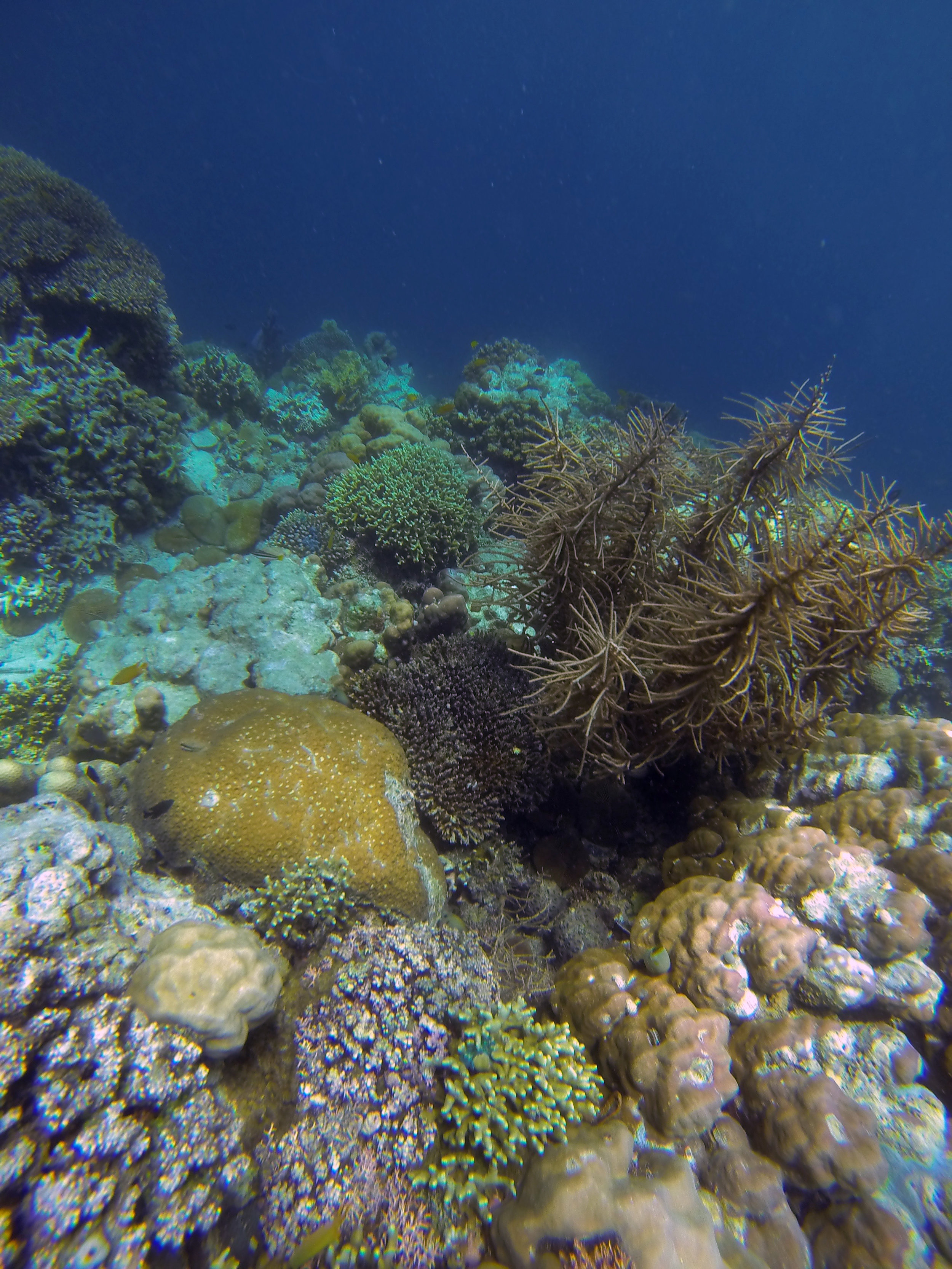 An underwater garden filled with varieties of soft corals, mushroom corals and underwater plants thrive around Mansud Wall. This photo was taken at a depth of around 10 to 15 feet.