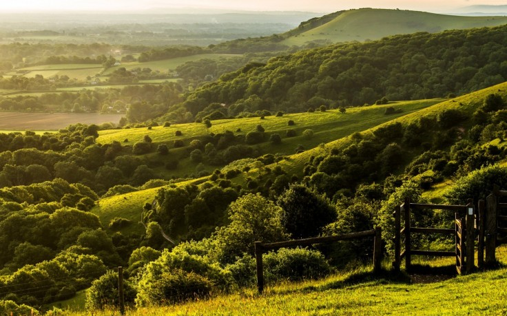 277800-nature-landscape-trees-forest-England-UK-hill-West_Sussex-field-grass-fence-green-736x459.jpg