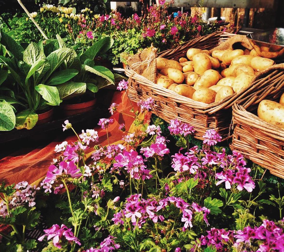 Petworth Farmer's Market