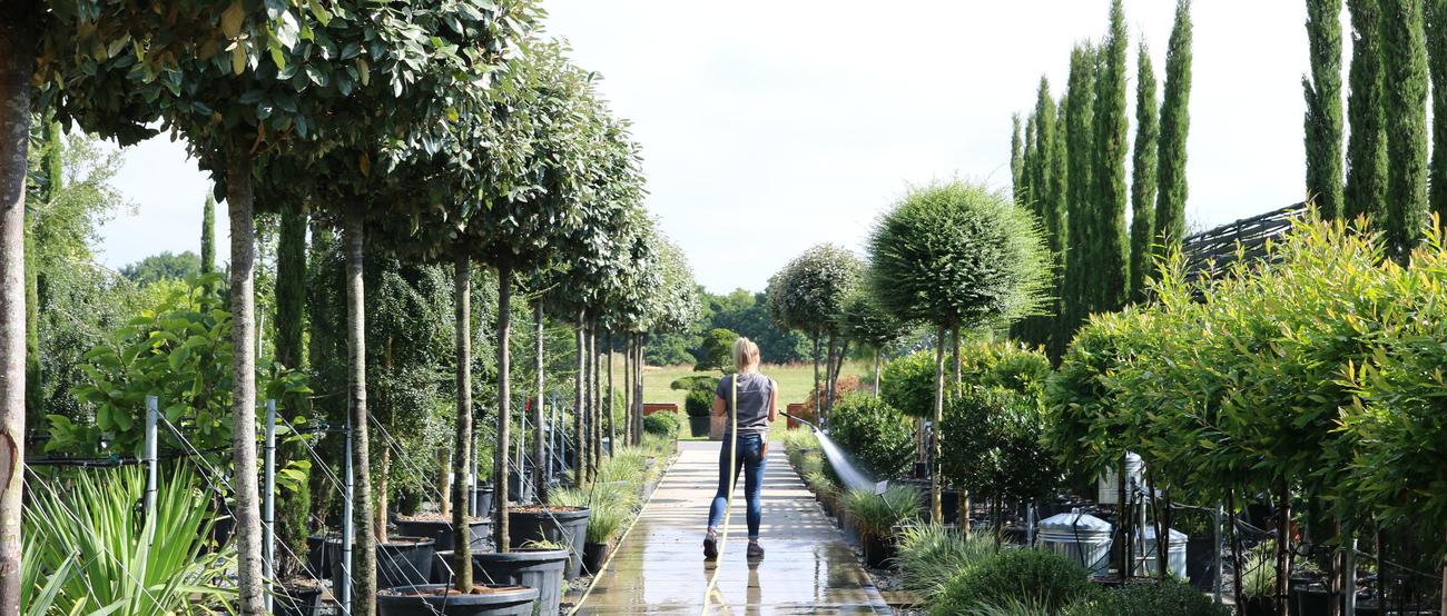Architectural Plants Nursery Visit