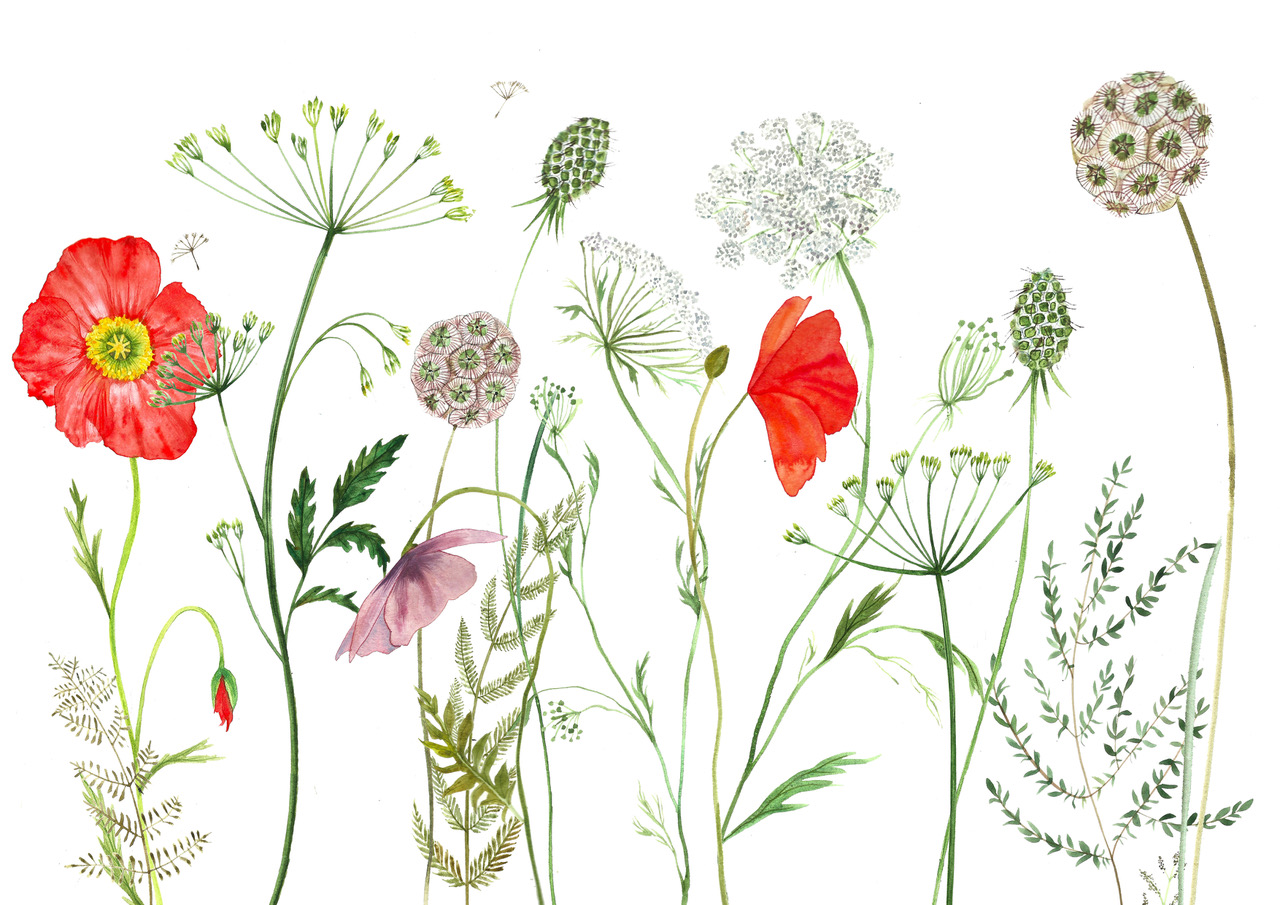 Floral and Botanical Watercolours with Naomi Howarth