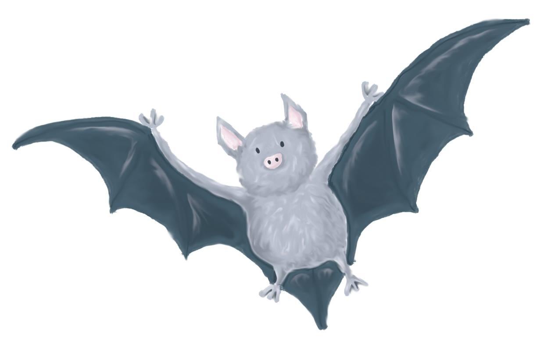 Spot the Bats at Petworth House