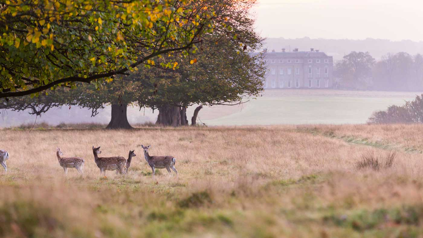 Petworth Park to see the Deer