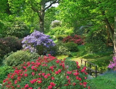 Petworth Gardeners Club Talk