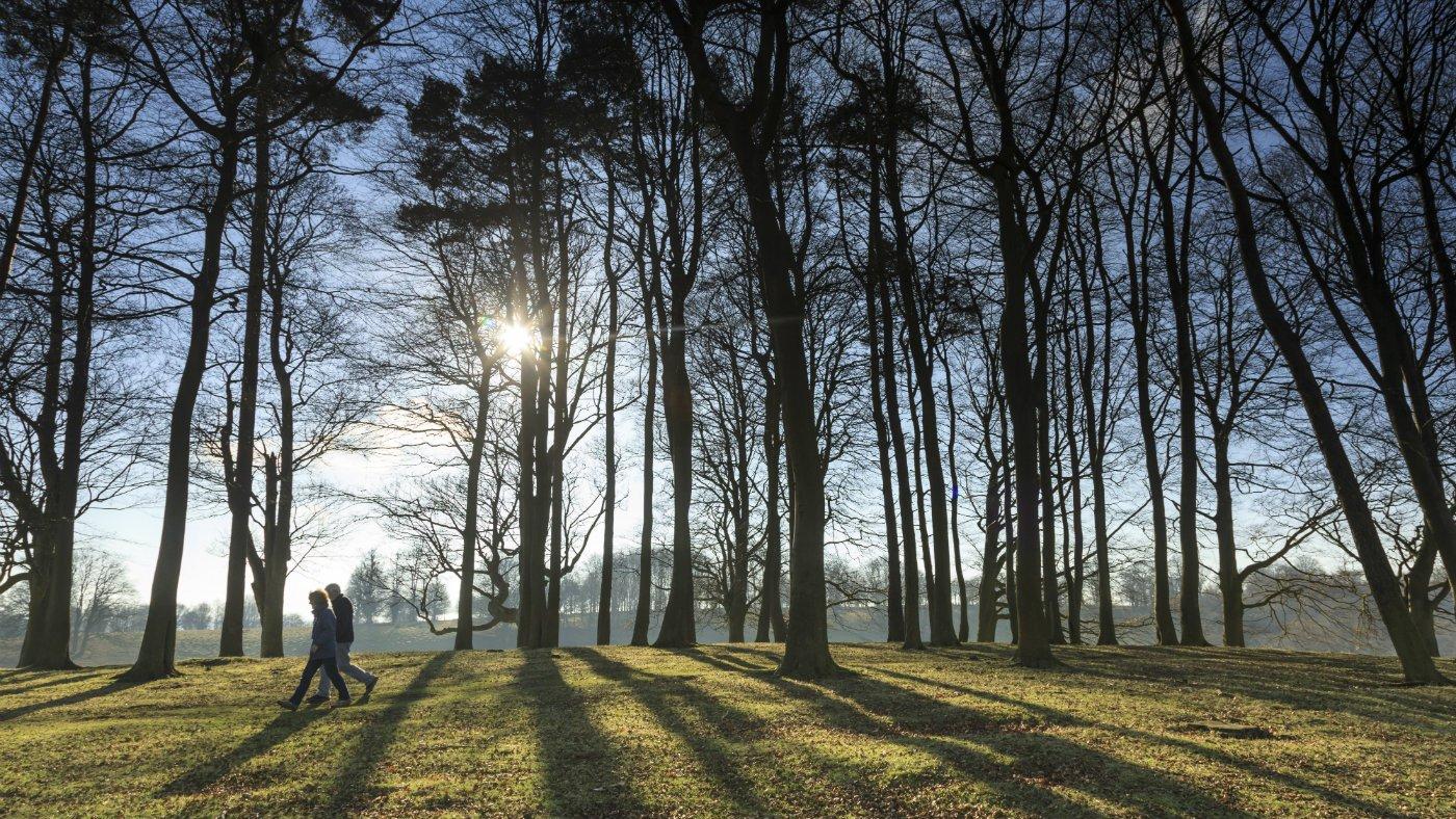 PETWORTH PARK ancient tree walk