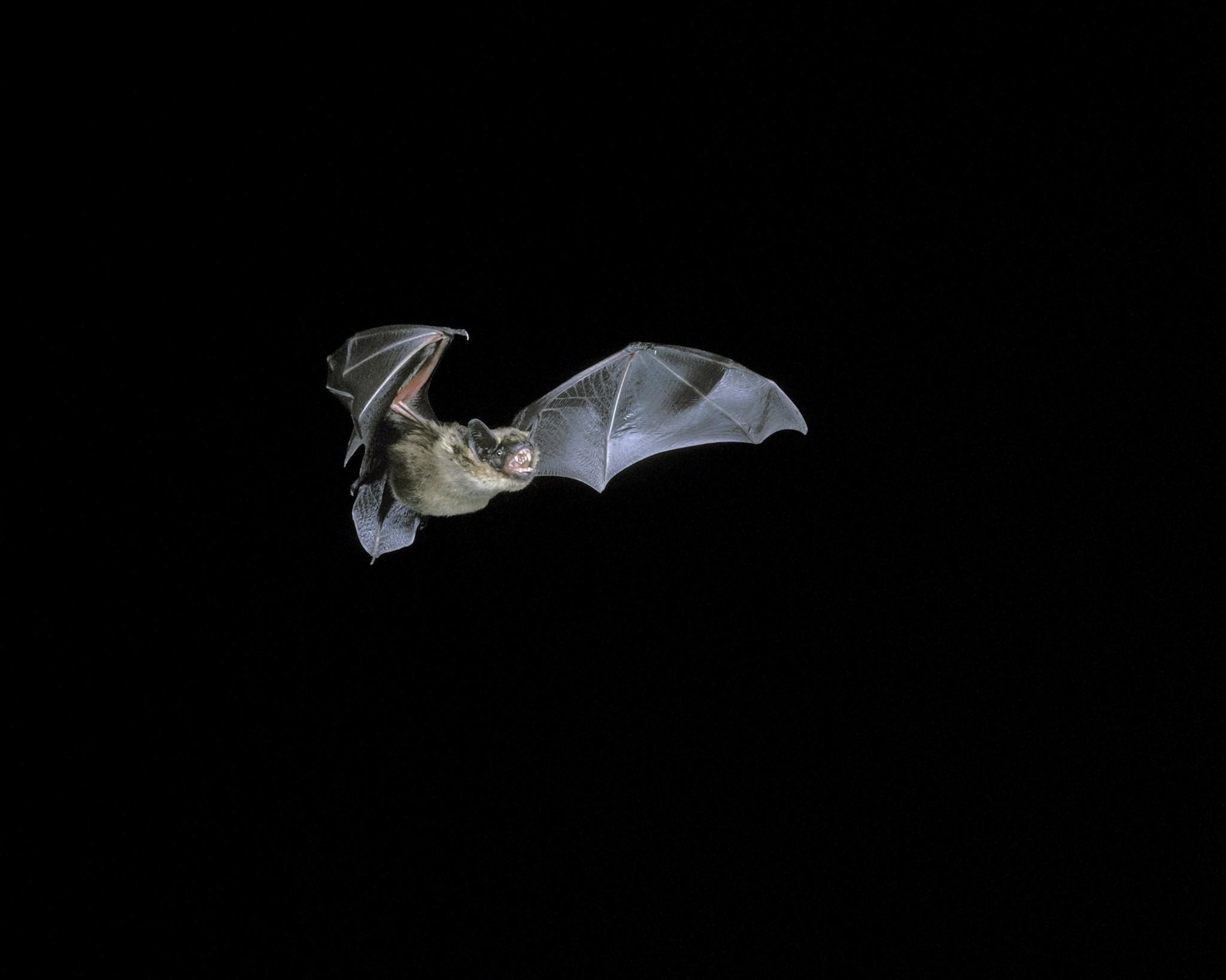 Halloween Crafts 'Make Your Own Bat Box'