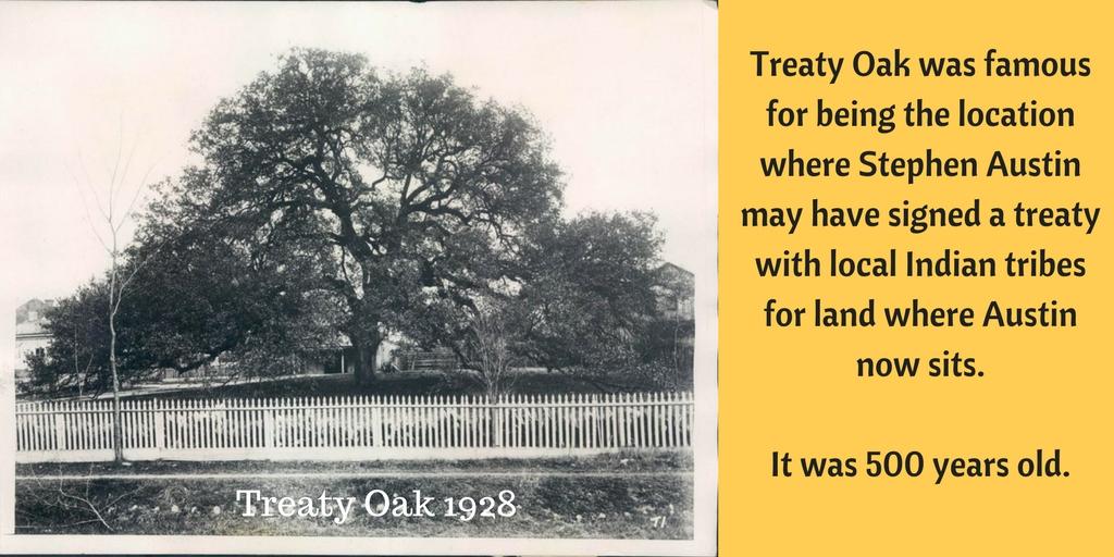 Treaty Oak1.jpg