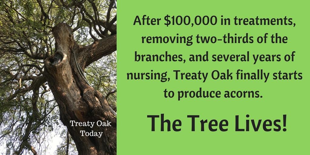 Treaty Oak5.jpg