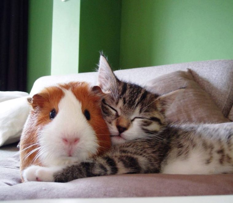 Your reward for reading to the end. An unbearably cute pair of unlikely animal friends.