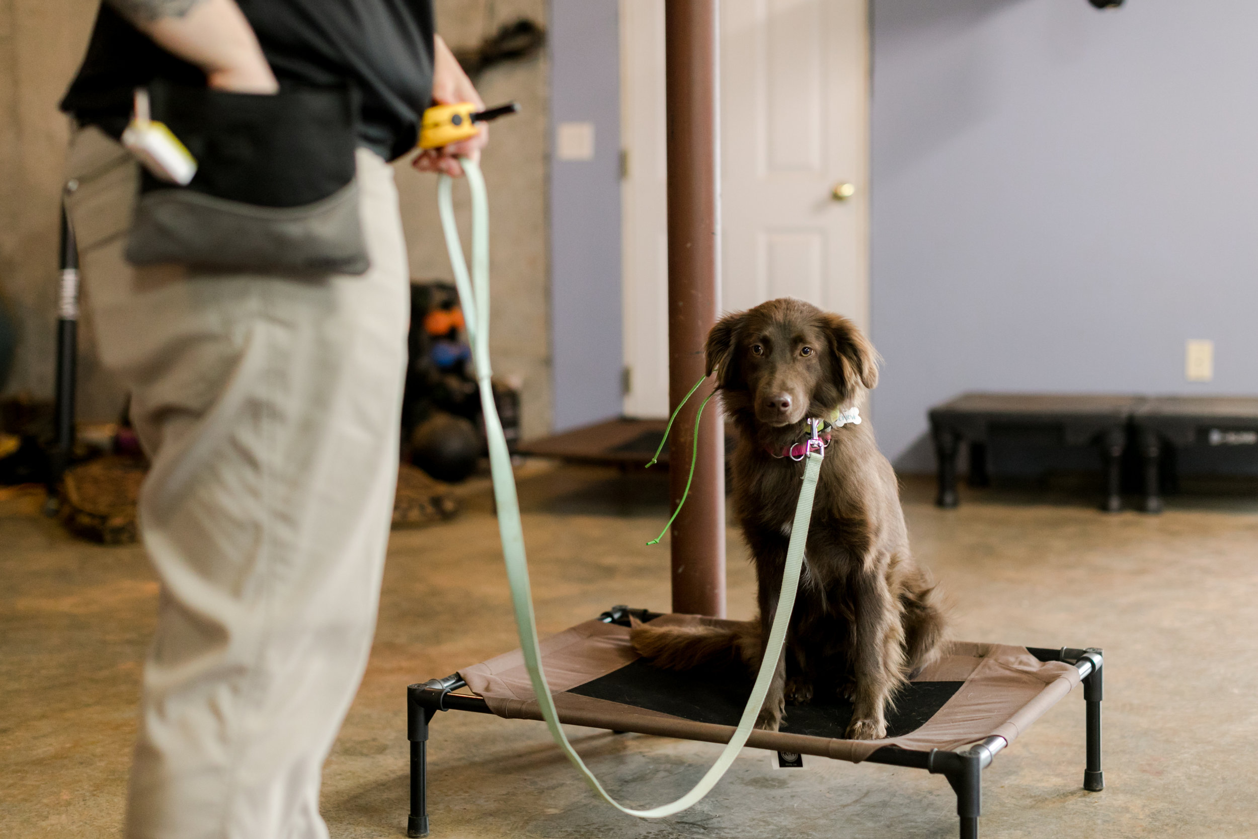 Sadies-Rules-K9-Training-2019-0098.jpg