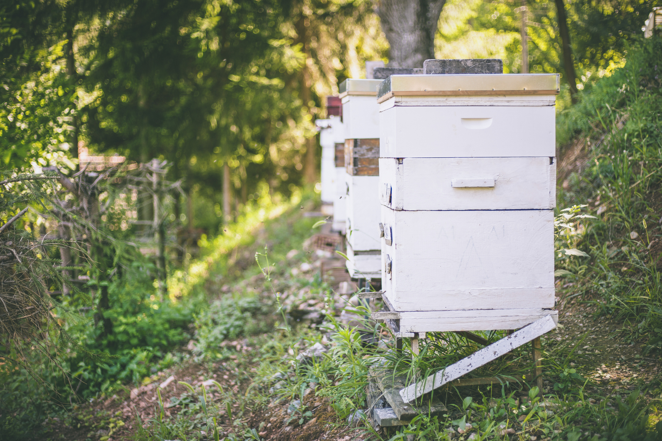 Bee hives in the meadow at daylight.
