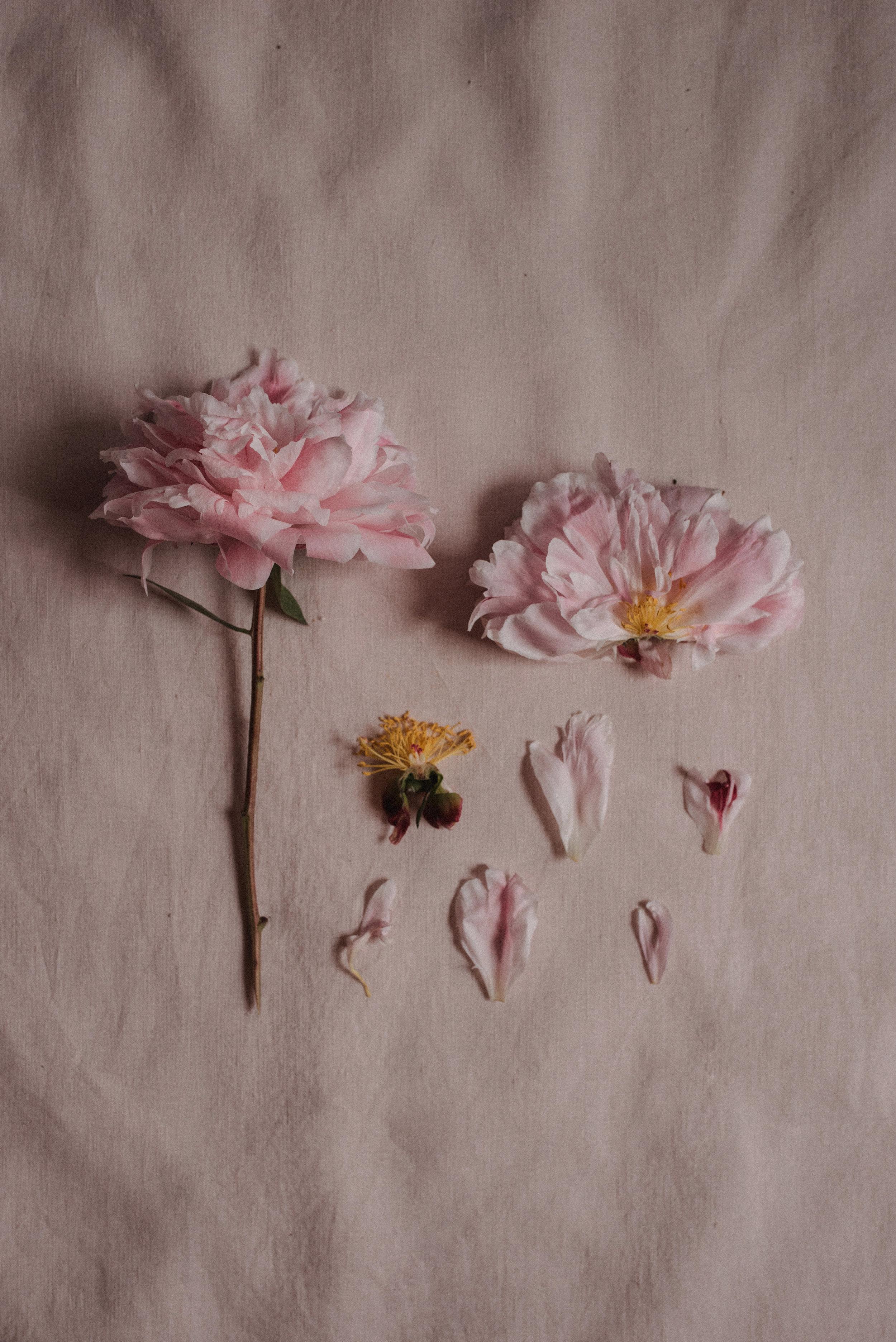 Minuit-Sauvage-Blooms-3.jpg