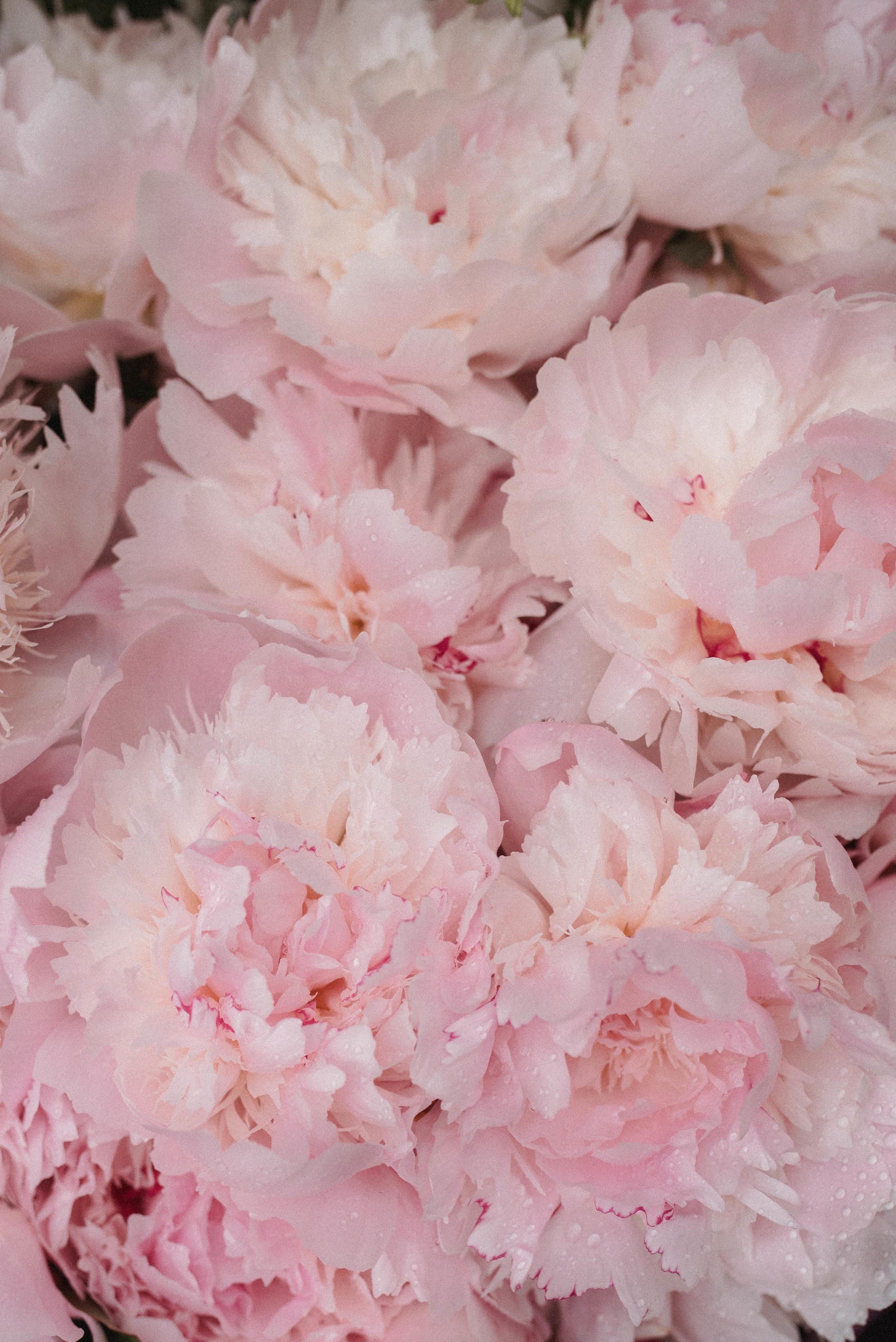 Fleurs de Claire - Mariages-3.jpg