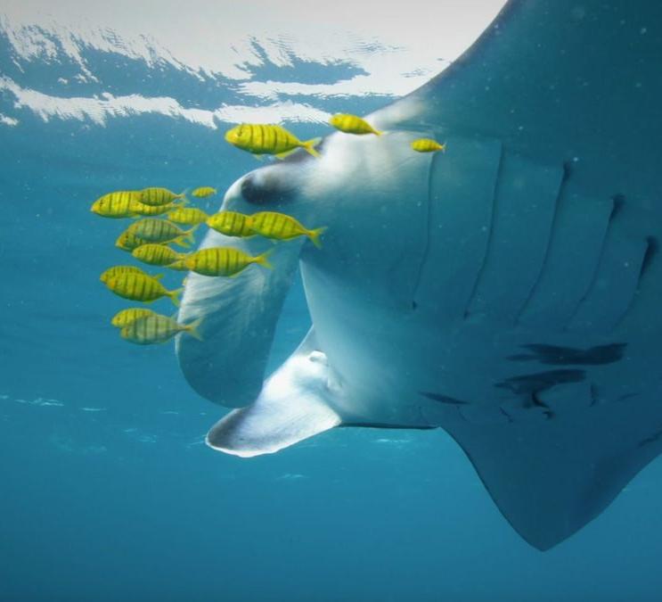 Conservation International: Valen's Reef