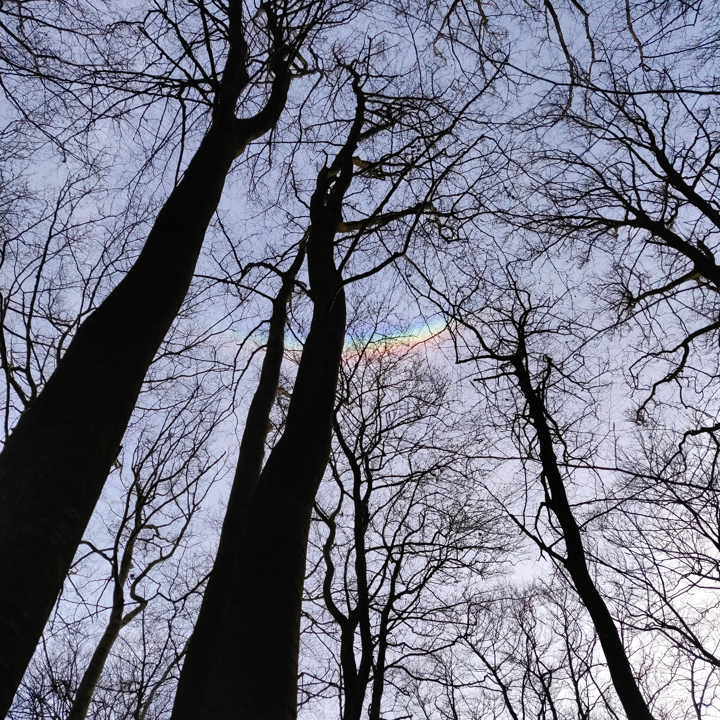 Circumzenithal Arc at Loughton Camp