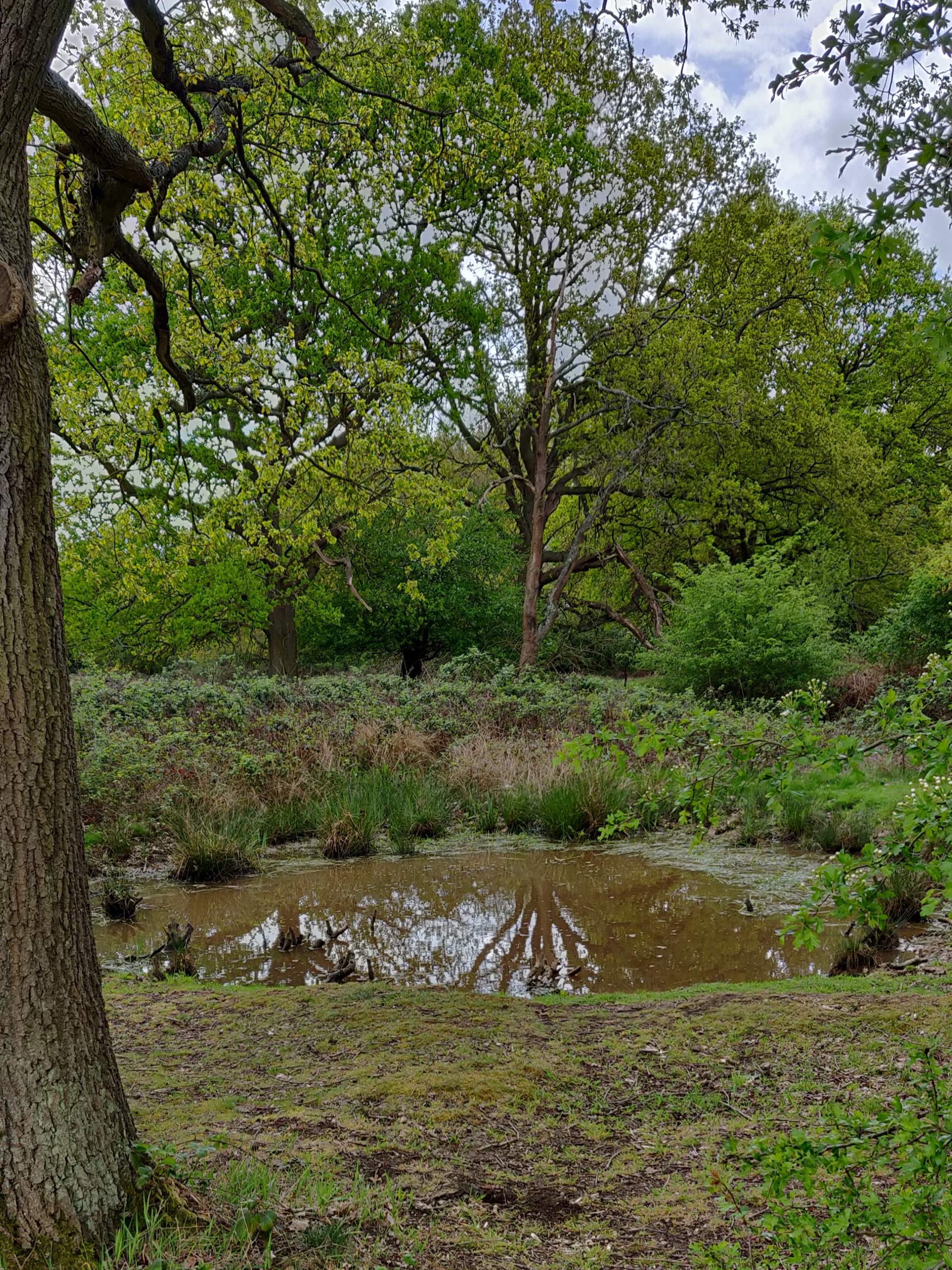 Bomb pond at Fairmead, Epping Forest