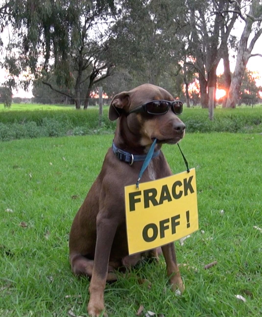 AFracturedState-Frack Off Dog-cropped.png