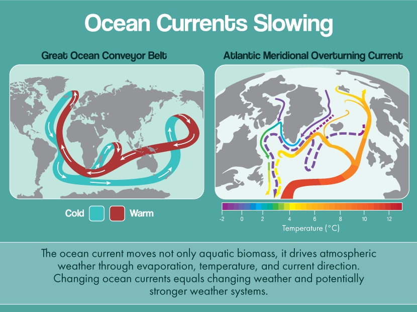 Infographic demonstrating the movement of AMOC and the role it plays in regulating global temperature and weather systems, from Aquaculture Directory.