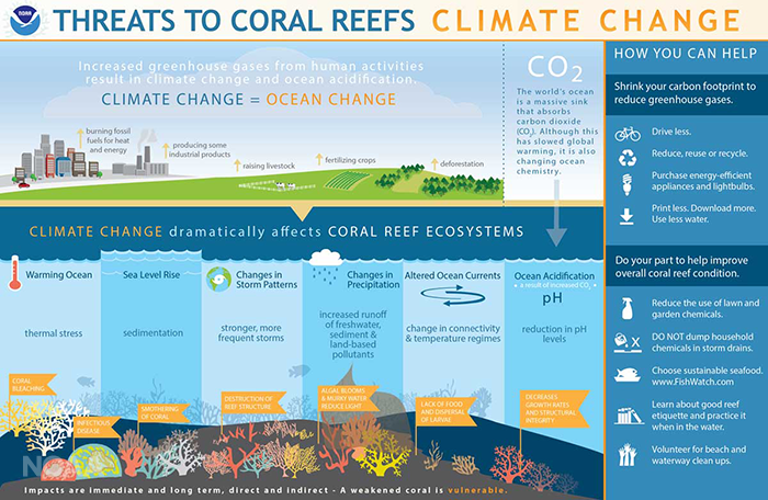 Infographic detailing how climate change impacts coral reef systems, from the National Oceanic and Atmospheric Administration (NOAA)