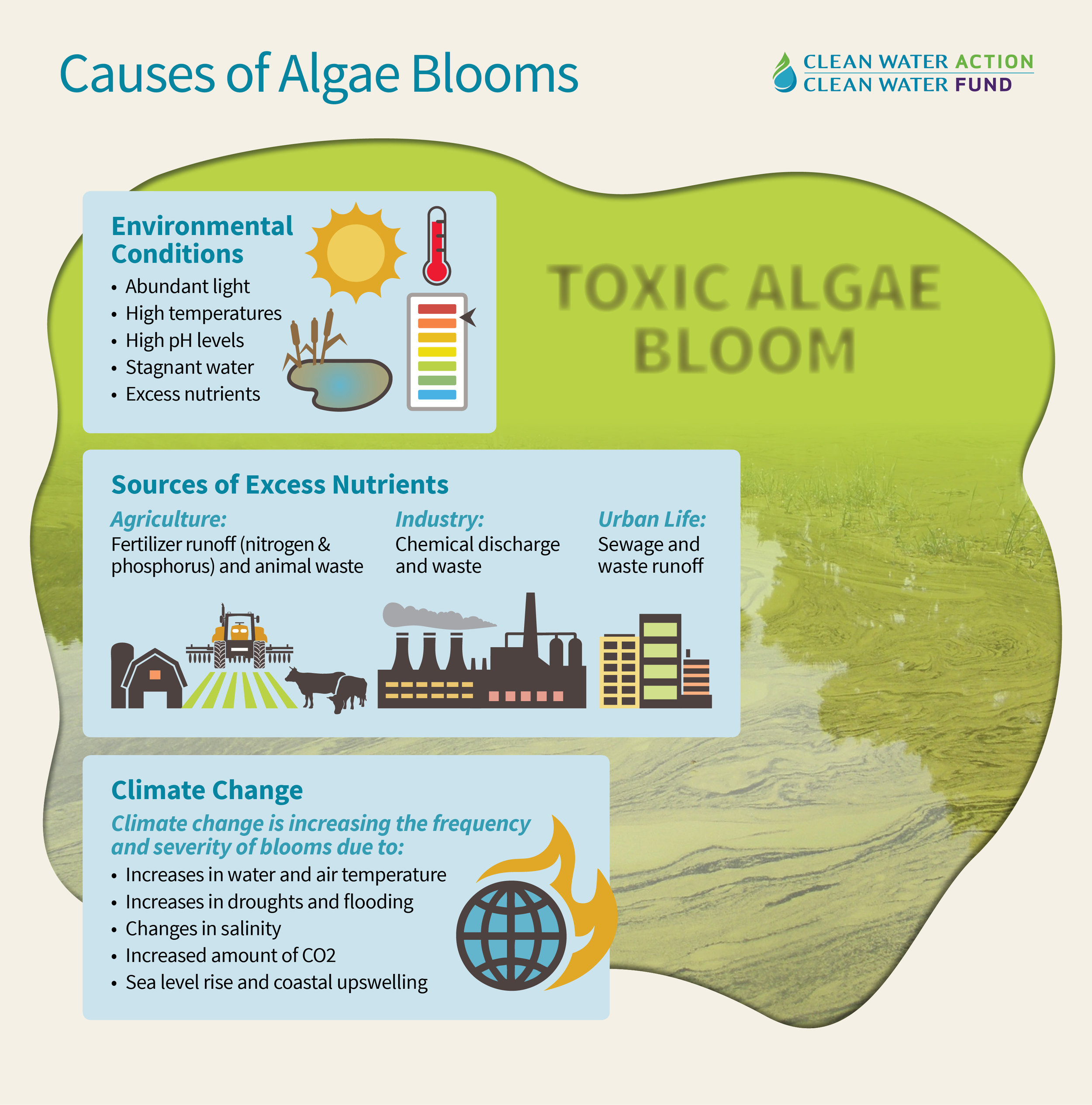 Infographic showing how climate change is causing an increase in algal blooms, both in severity and number of occurrences, from Clean Water Action.