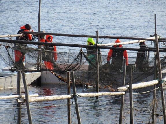 Fisheries_3.jpg