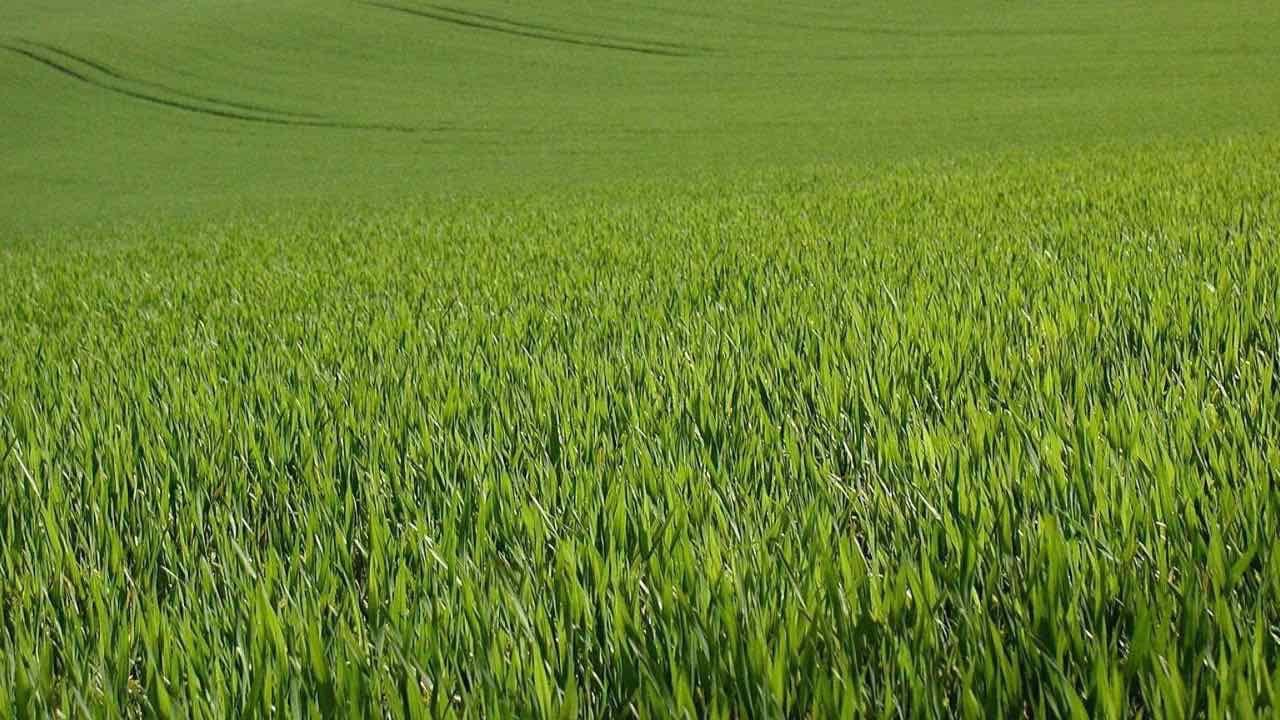 agricultural-grass.jpg