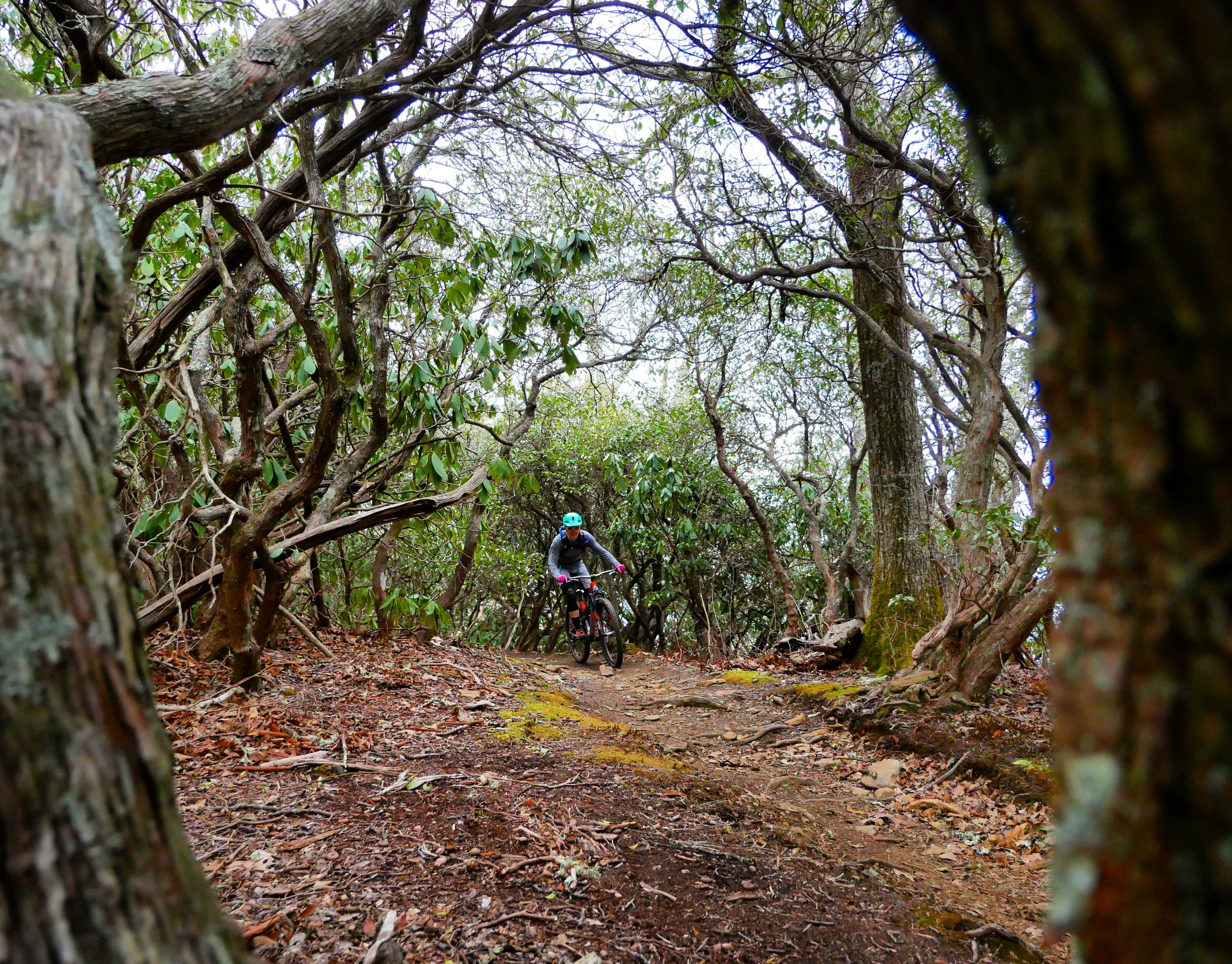 It really is tough to beat trails like this! Jenna ripping down Pilot Rock in Pisgah!