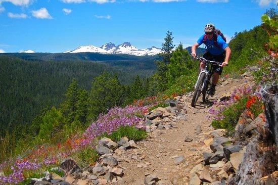 cog-wild-mountain-bike.jpg