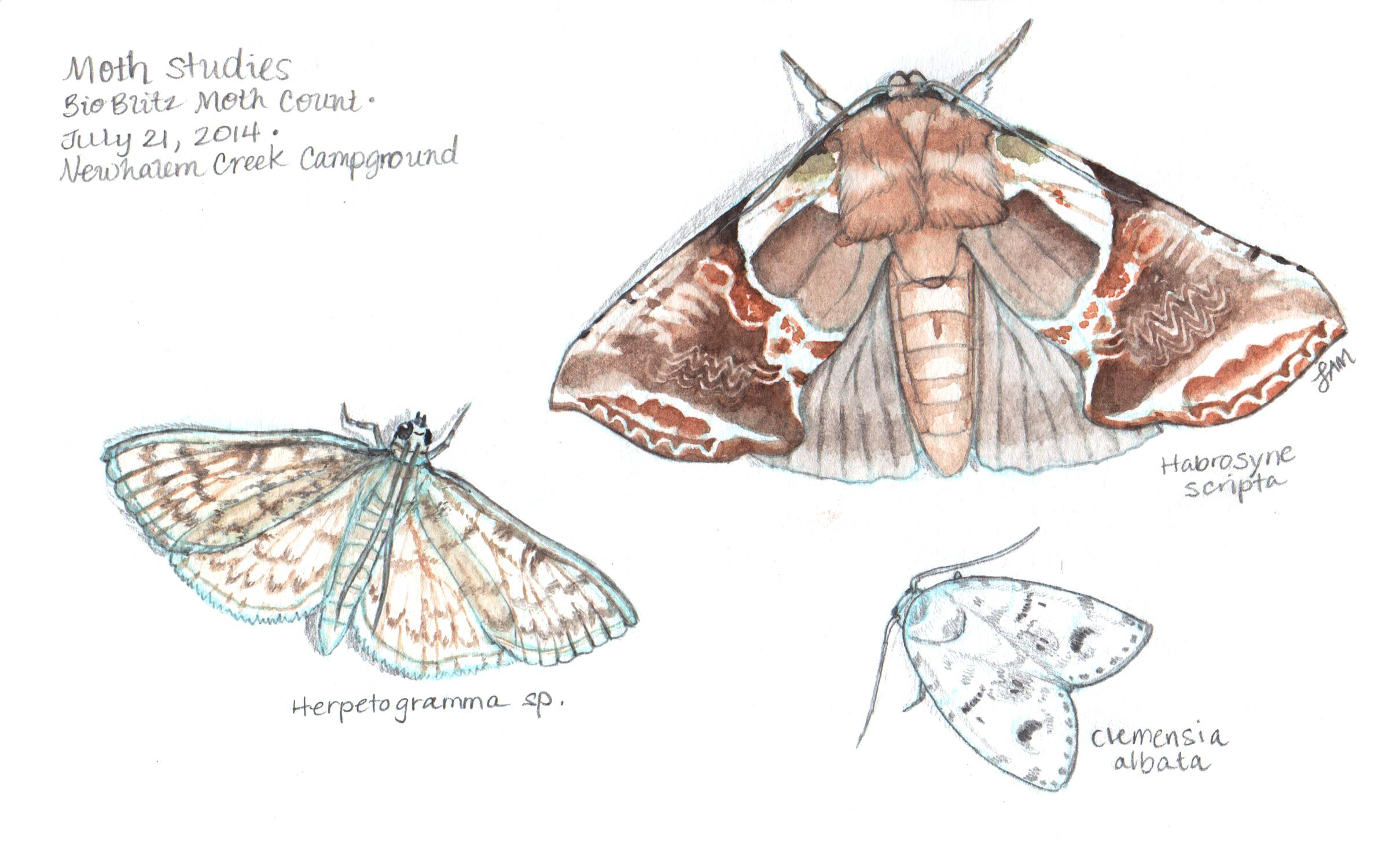 Moths at NOCA Vistor's Center