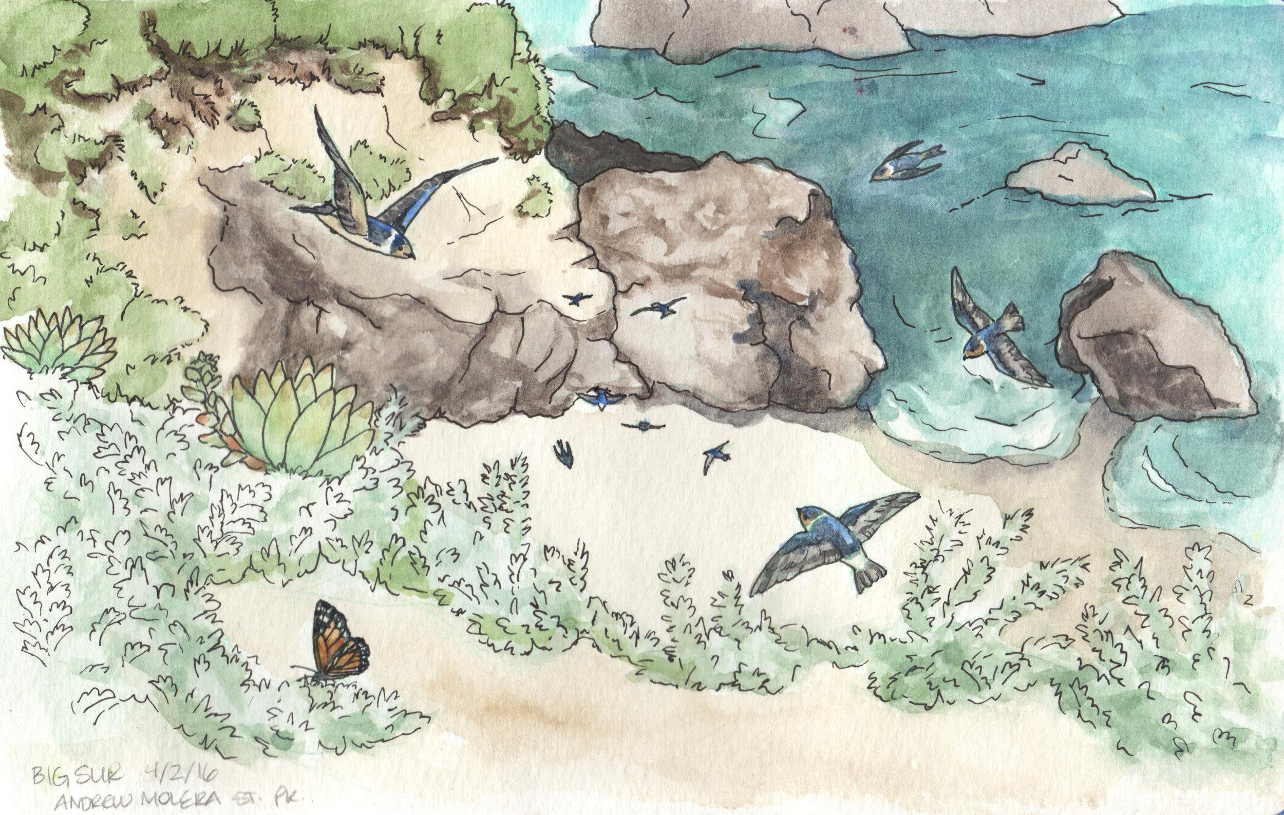 Big Sur Swallows