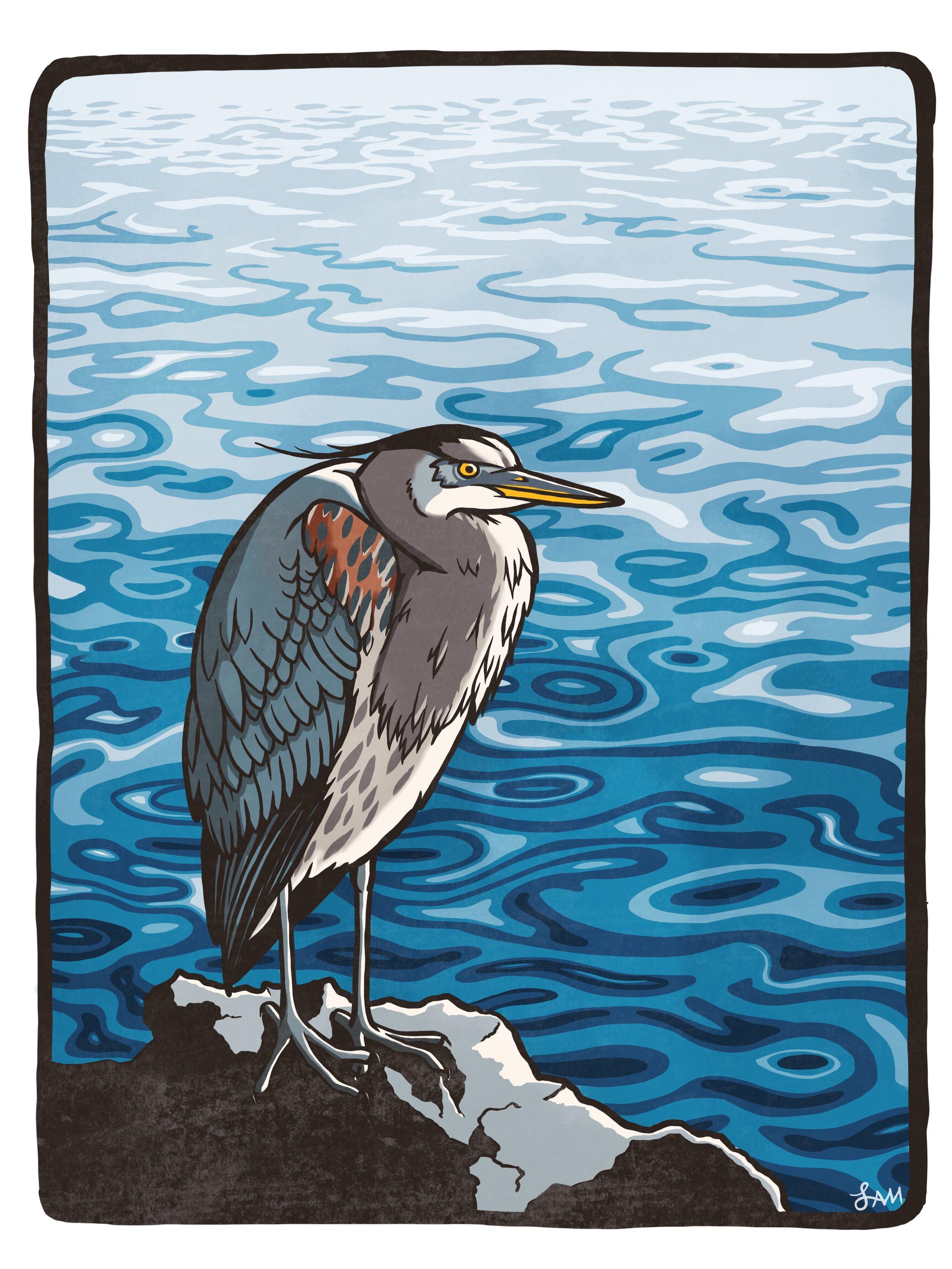Bay Heron